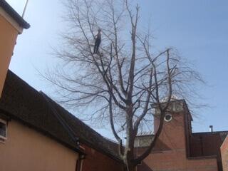 TreeWorks_IMG_1049