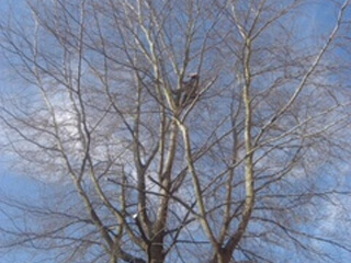 TreeWorks_IMG_1051